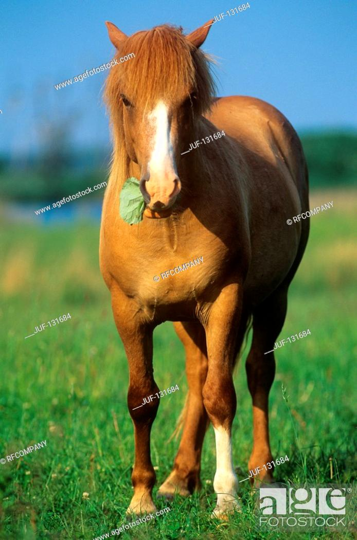 Stock Photo: German warmblood horse - standing on meadow.