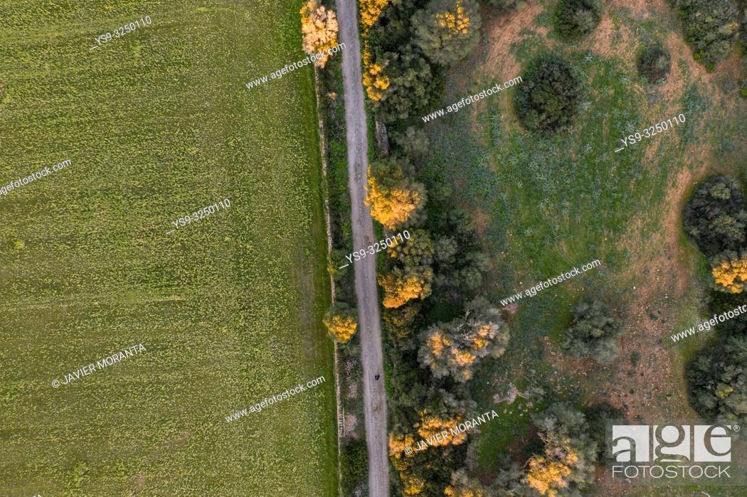 Stock Photo: Aerial view of a rural road, Balearic Islands, Spain, Mallorca, Llucmajor.