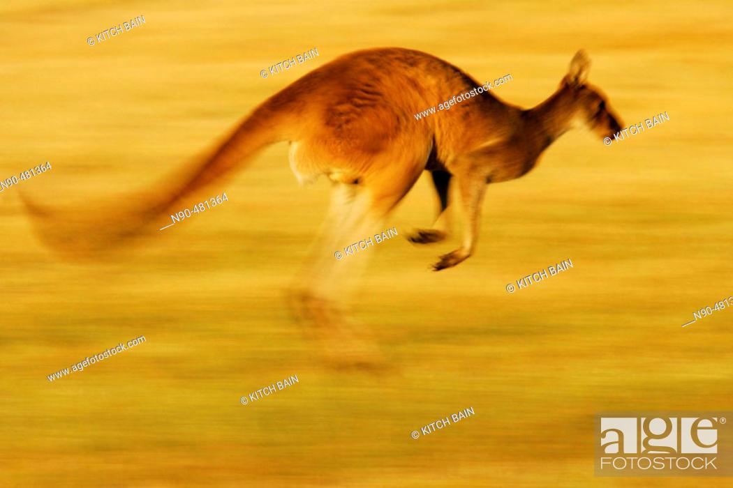 Stock Photo: Wildlife.