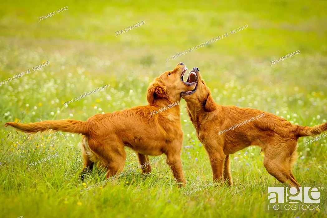 Stock Photo: playing dogs.