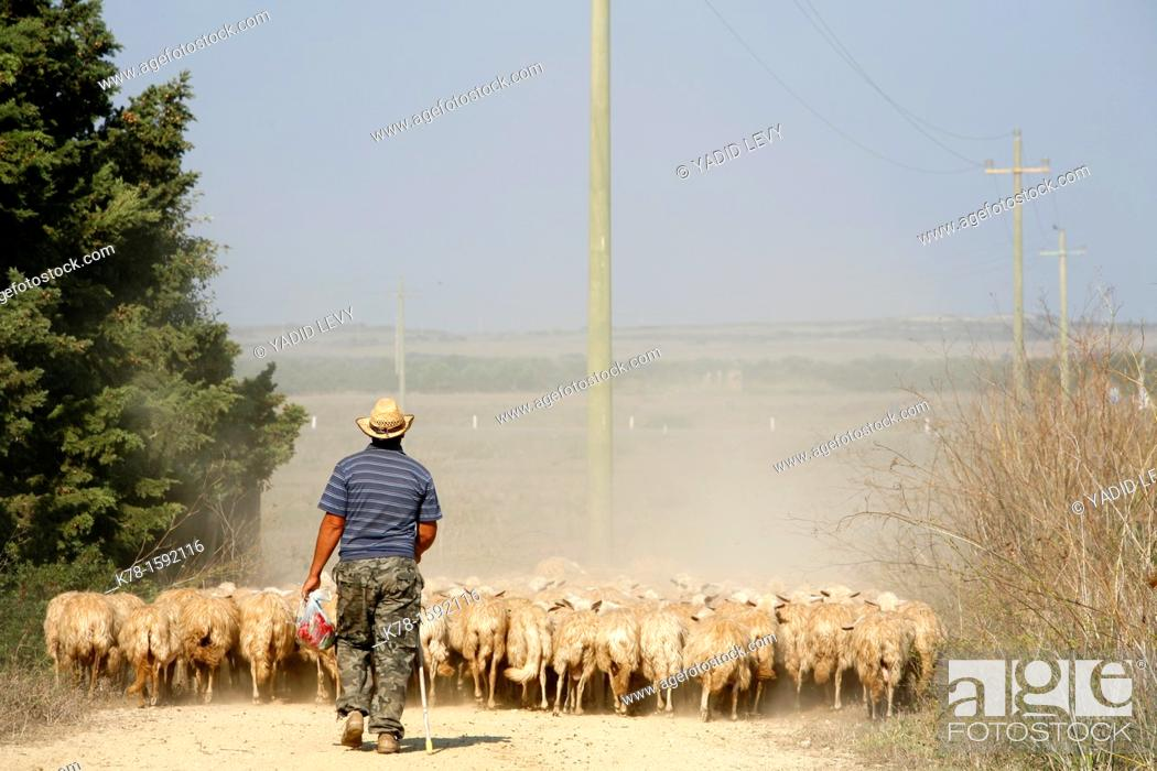 Stock Photo: Sheep herder in the west coast ,Sardinia, Italy.
