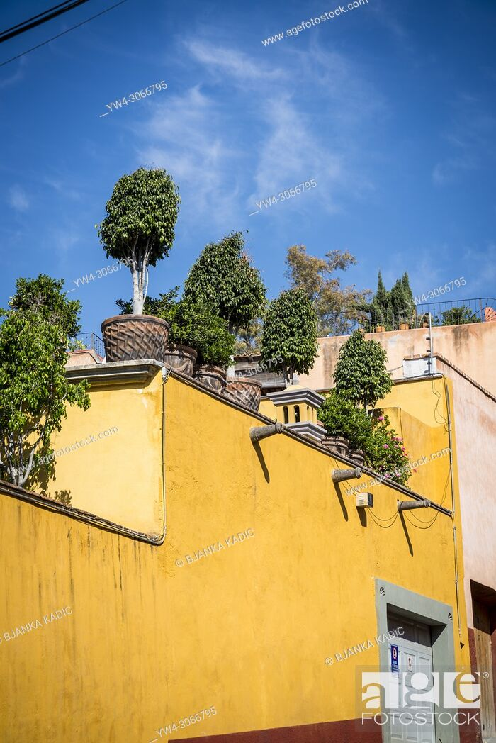 Stock Photo: Potted plants on the roof of a house, San Miguel de Allende, a colonial-era city, Bajío region, Central Mexico.