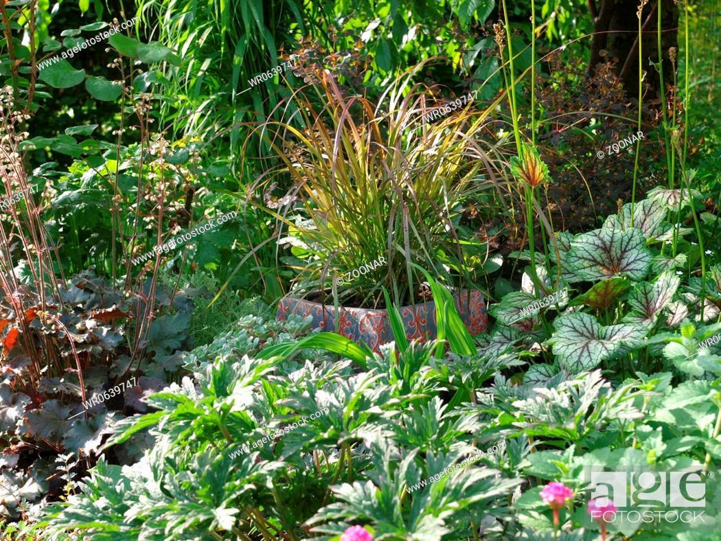 Stock Photo: Staudenbeet mit rotem Lampenputzergras.