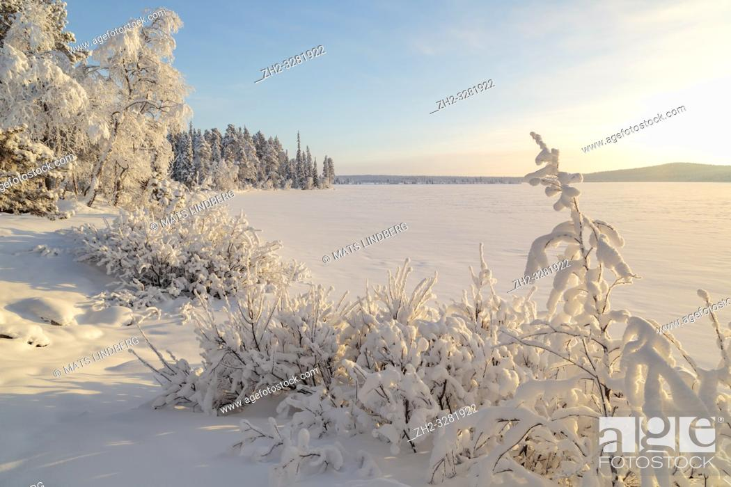 Stock Photo: Landscape in winter season, nice warm afternoon light, snowy trees, mountain in background, Gällivare county, Swedish Lapland, Sweden.