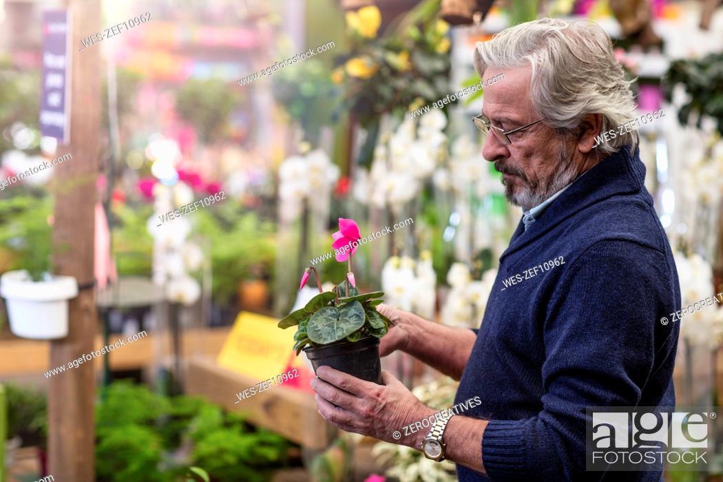 Stock Photo: Man loking at flower at garden center.