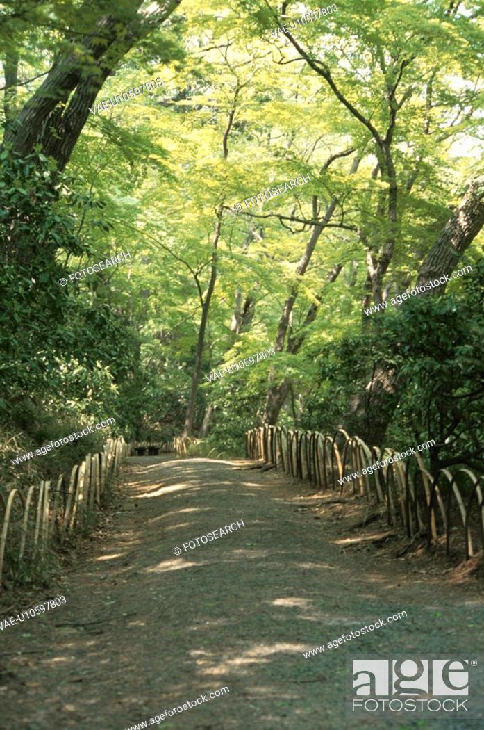 Stock Photo: A Woodland Path.