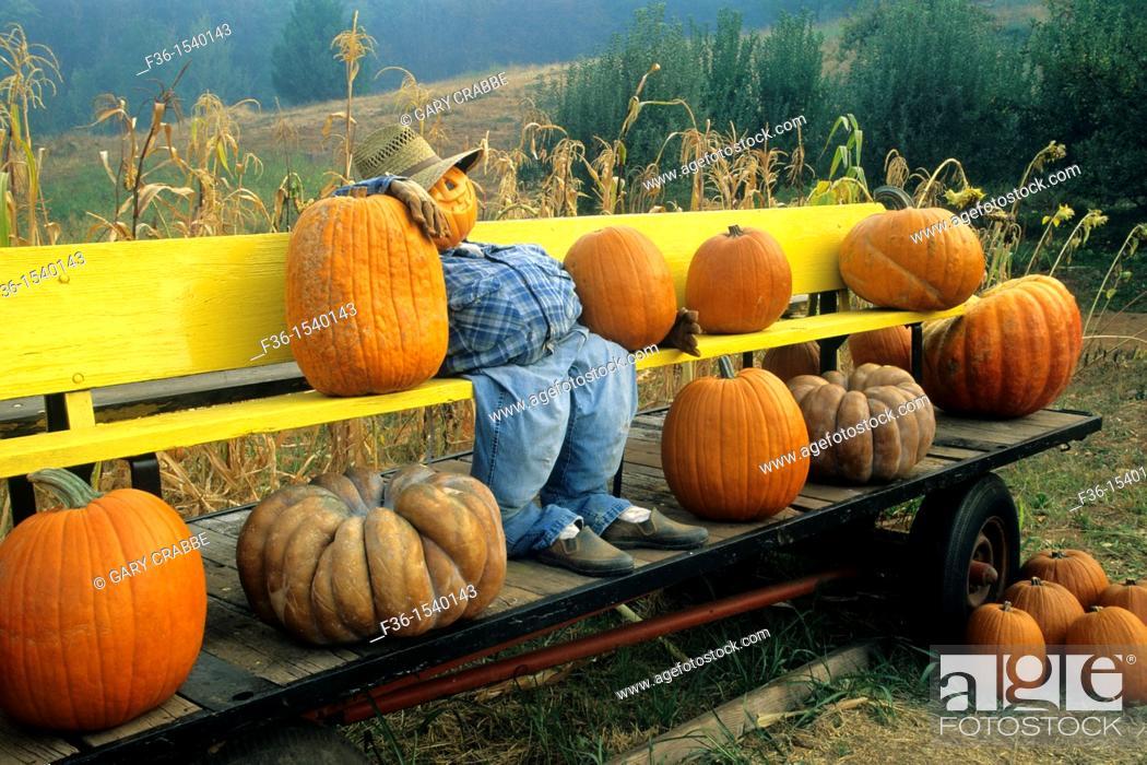 Stock Photo: Fall Harvest display at Pumpkin patch, Goyettes Ranch Apple Farm, Camino Eldorado County, California.