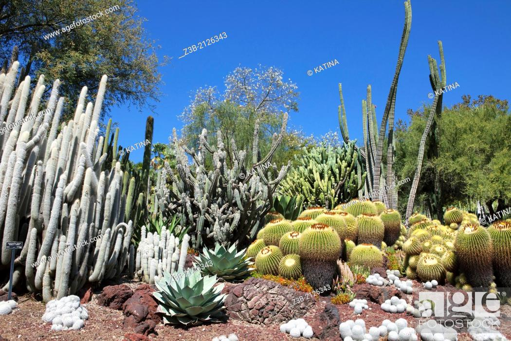 Stock Photo: Cacti in full sun in the Desert Garden of Huntington Gardens and Library, San Marino, California, USA.