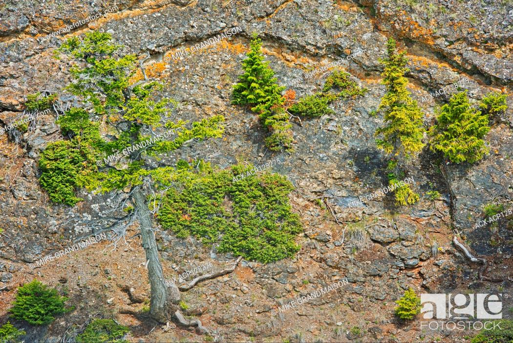 Imagen: Shrubs and trees growing on the steep cliffs along the Bow River at Bow Falls Banff National Park Alberta Canada.