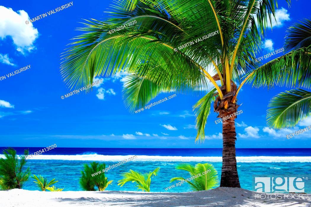 Stock Photo: Single palm tree overlooking amazing lagoon.