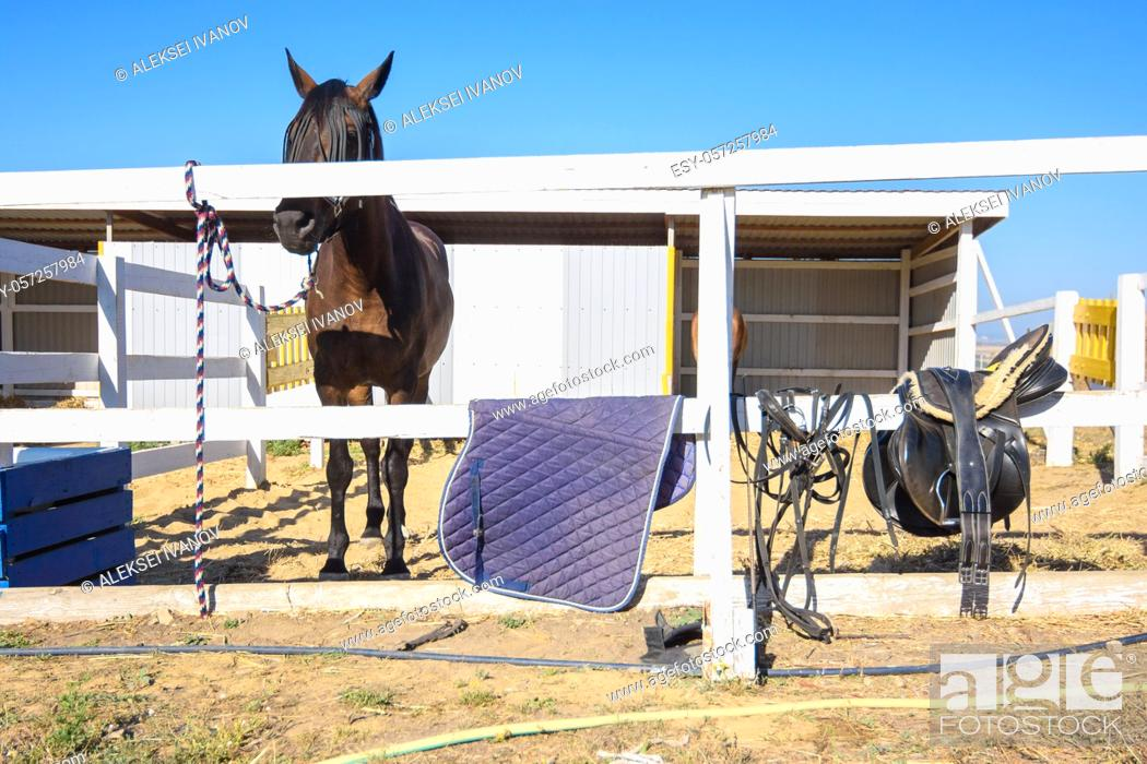 Stock Photo: There is a saddle and a rug on the fence, a horse is tied behind the fence.