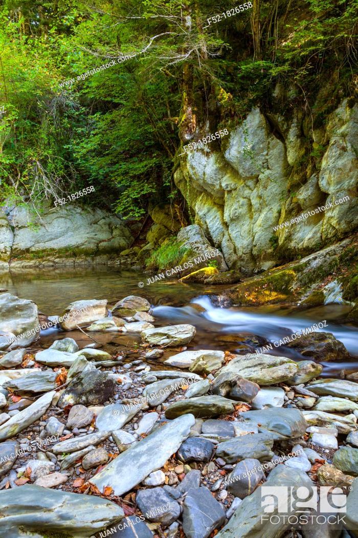 Stock Photo: Selva de Irati, Navarra, Spain, Europe.
