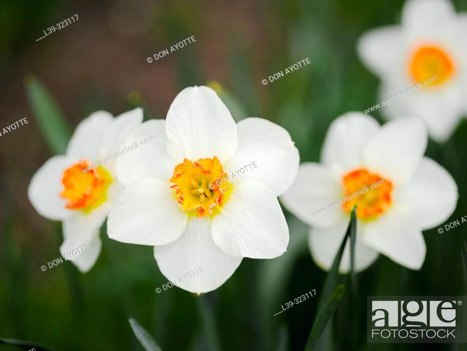 Stock Photo: Flower in a garden.