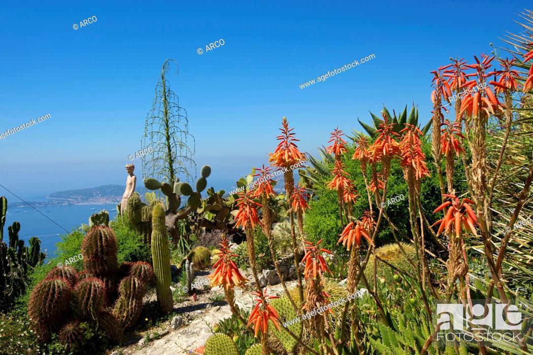 Jardin Exotique In Eze Cote D Azur Alpes Maritimes Provence Alpes