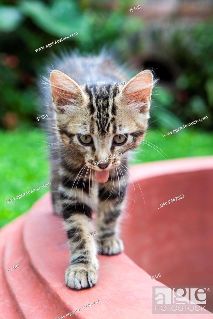 Stock Photo: Kitten in garden.