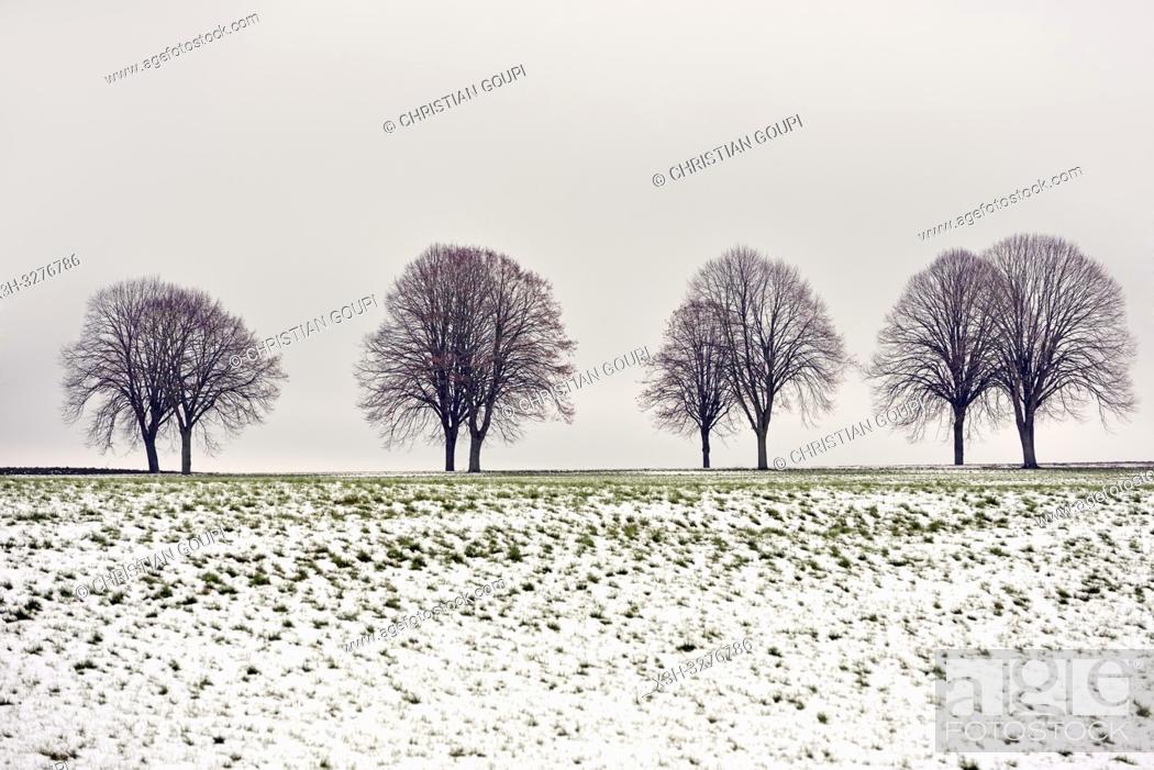 Stock Photo: paysage de la Beauce en hiver, departement d'Eure-et-Loir, region Centre-Val de Loire, France, Europe/landscape of Beauce in winter, Eure-et-Loir department.