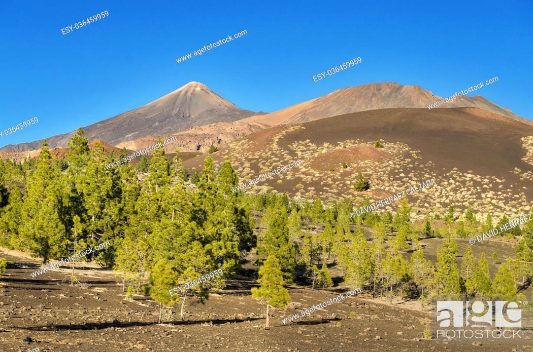 Imagen: El Teide national park, Tenerife, Canary island, Spain.