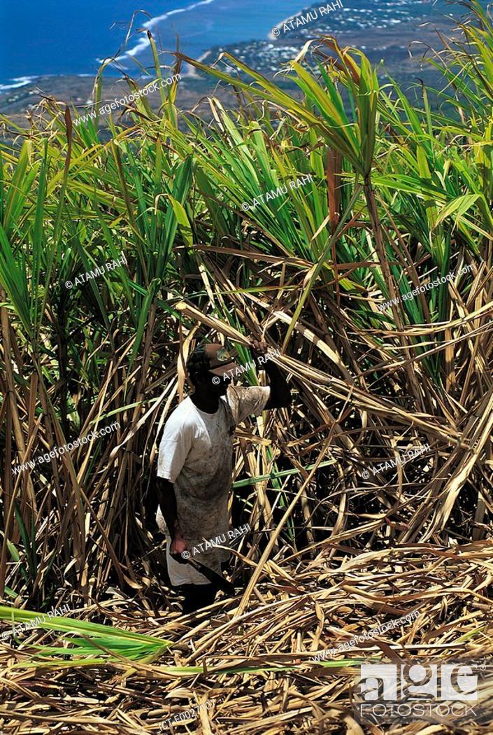 Stock Photo: Reunion, Saint-Pierre, sugar cane cutter at work.