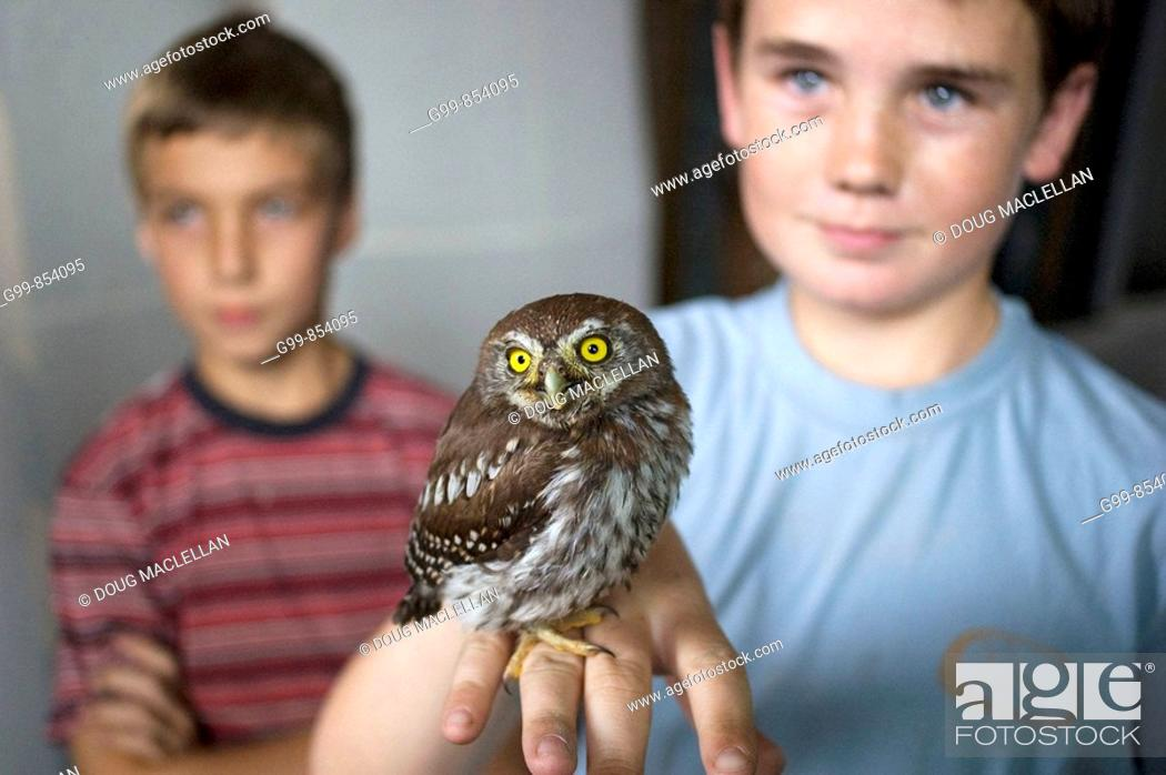 Stock Photo: Two boys hold an owl at the Reps Theatre in Harare, Zimbabwe. The bird appeared to be slightly injured.
