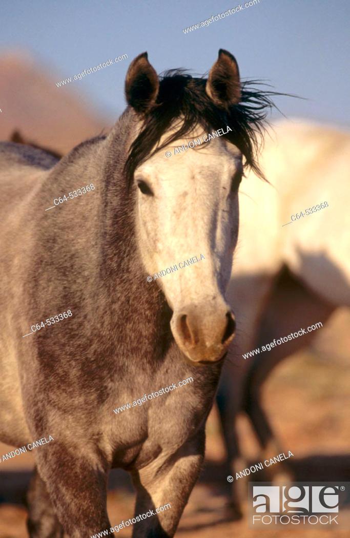 Stock Photo: Namib Desert. Namibia.