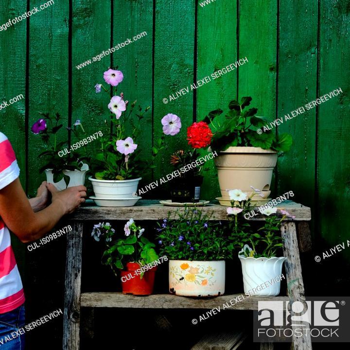 Stock Photo: Woman arranging flower pot on rack.