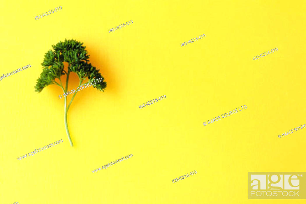 Stock Photo: Sprig of parsley.