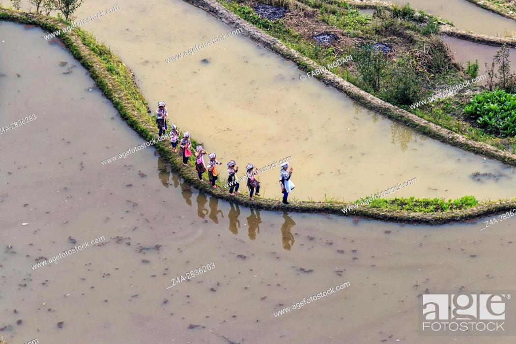 Stock Photo: YuanYang, China - February 20, 2017: People dressed with the typical Hani attire dancing between rice paddings. Hani are one of the 56 minorities in China and.