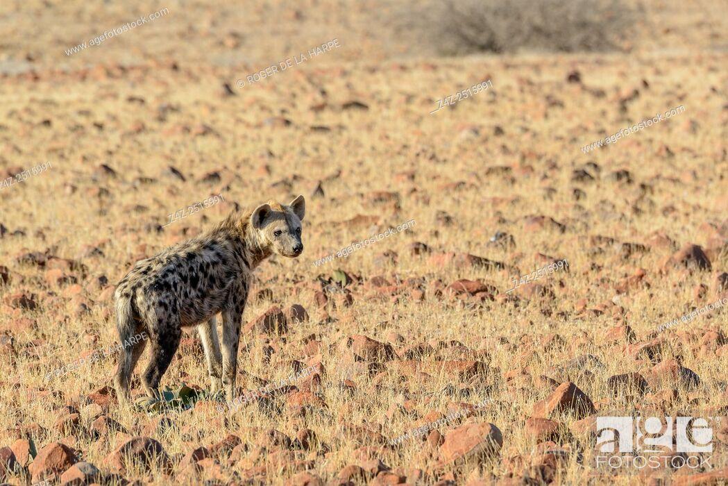 Imagen: Desert Rhino Camp. Palmwag Concession. Namibia.