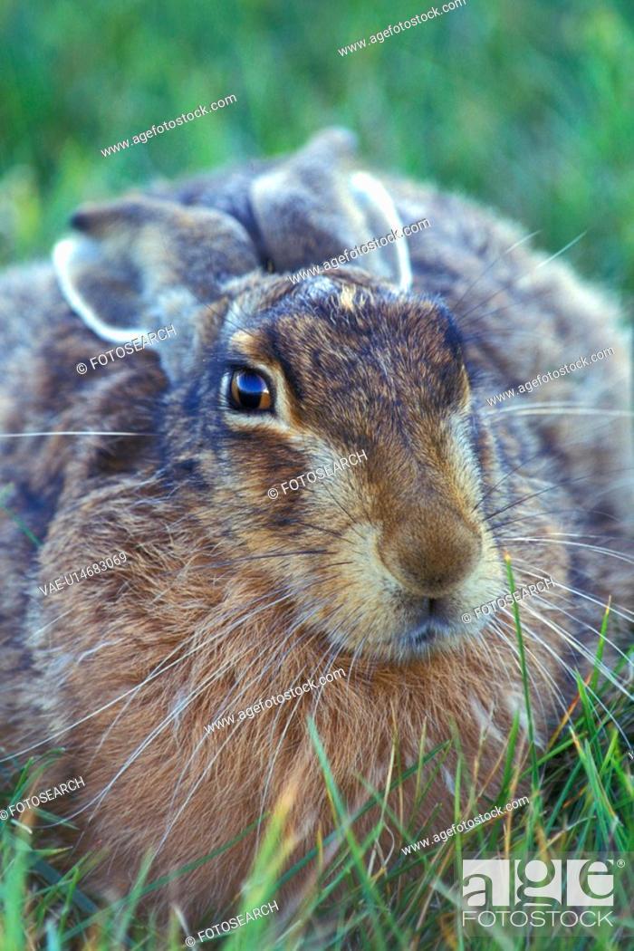 Stock Photo: brown, Christian, bunny, animals.