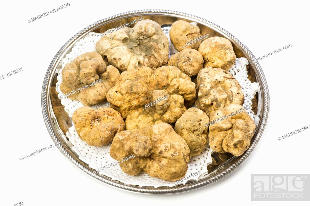 Stock Photo: Many white truffles from Piedmont on steel tray placed on a white background.
