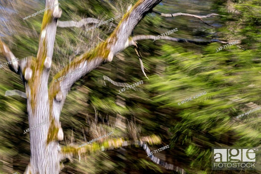 Stock Photo: Moved deciduous tree, abstract, Bavaria, Germany, Europe.