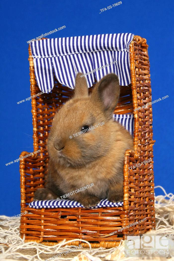 Stock Photo: young dwarf rabbit in beach chair.