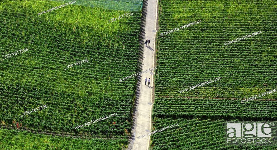 Stock Photo: walking couples in Lavaux Vineyards, Lake Geneva Region, Swiss Riviera, Vaud, Switzerland.