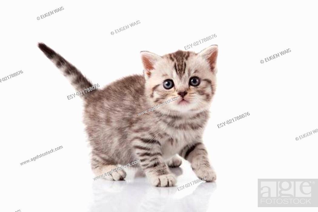 Stock Photo: kitten on a white background.