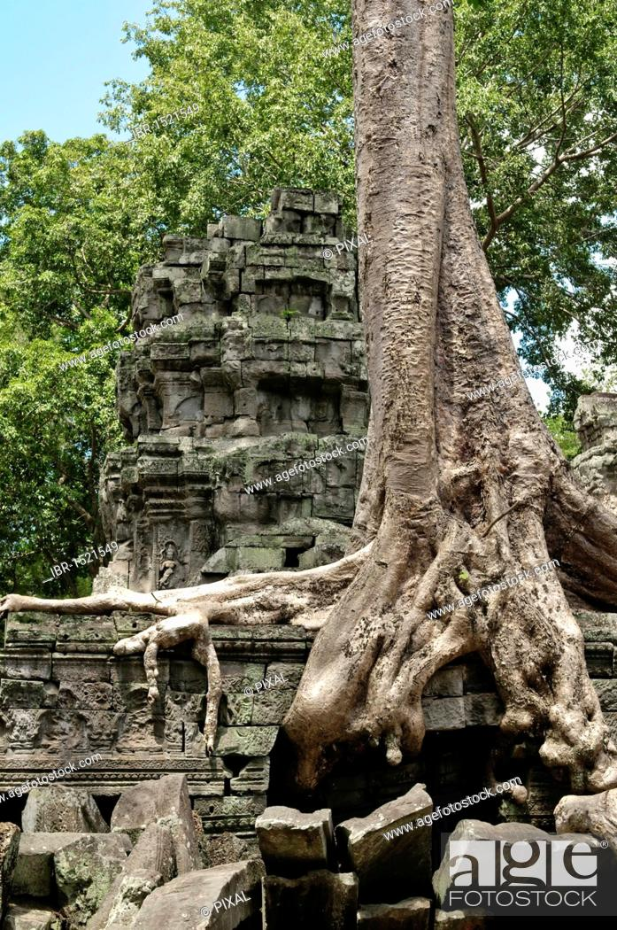 Stock Photo: Ta Prohm, Angkor Wat complex, Siem Reap, Cambodia, Southeast Asia, Asia.
