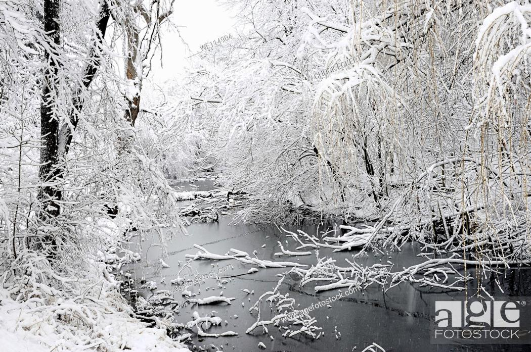 Stock Photo: Overgrown canal in winter.