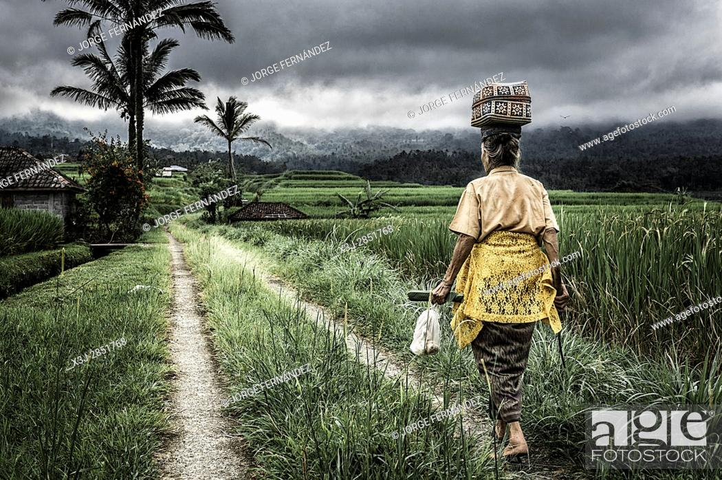 Stock Photo: Woman walking along the rice fields with a load on her head.
