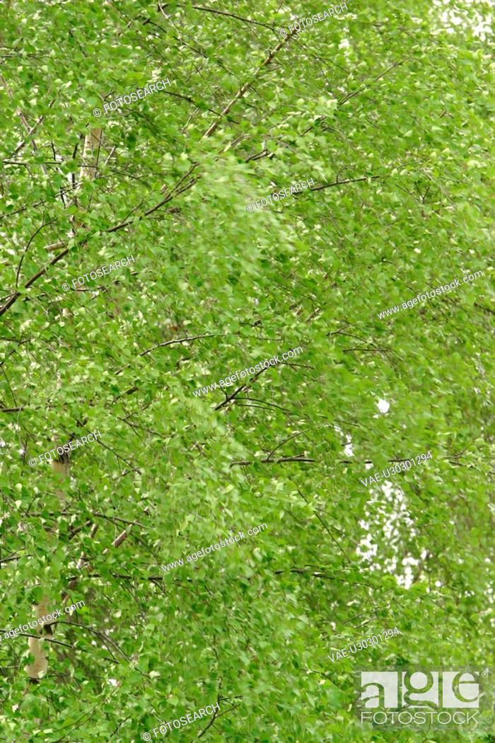 Stock Photo: vegetation, wild, yield, organic, foliage, leaf shape.