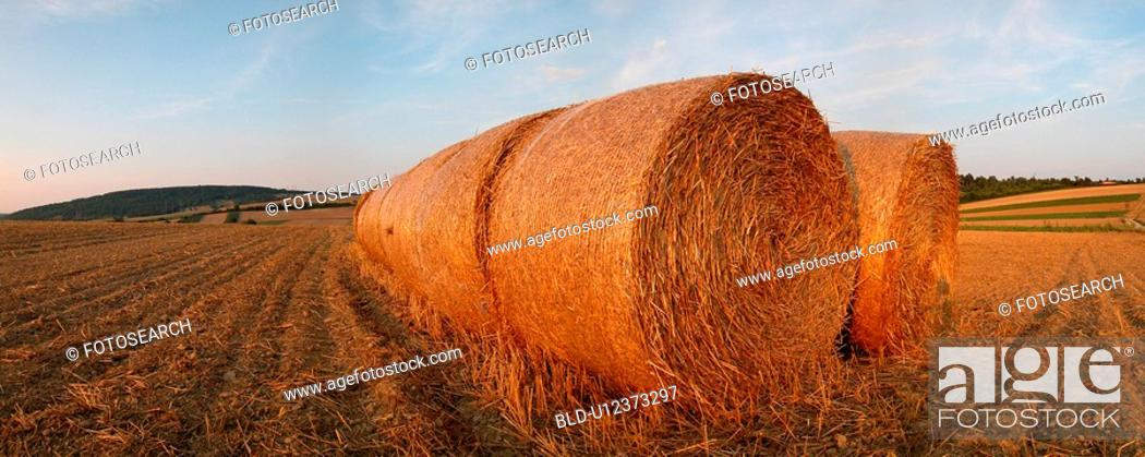 Stock Photo: Round bails of hay in a field.