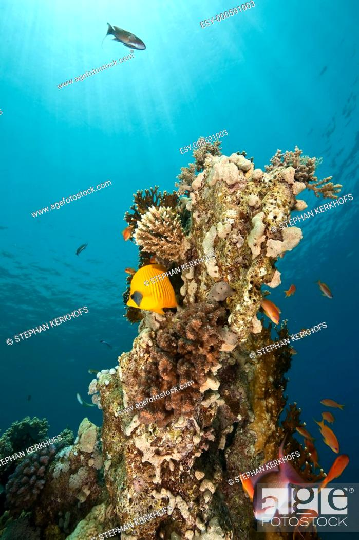 Stock Photo: coral and fish around Shaab Mahmud.