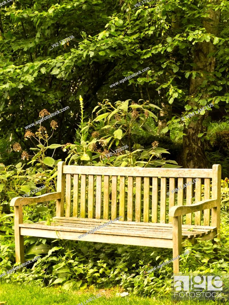 Stock Photo: Wooden bench in park with lush foliage.