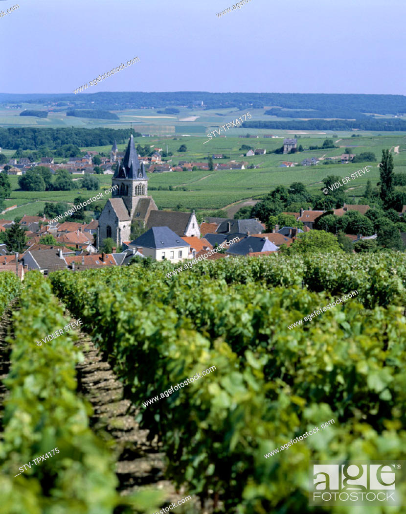 Stock Photo: Champagne, France, Europe, Holiday, Landmark, Near, Reims, Tourism, Travel, Vacation, Vineyards,.