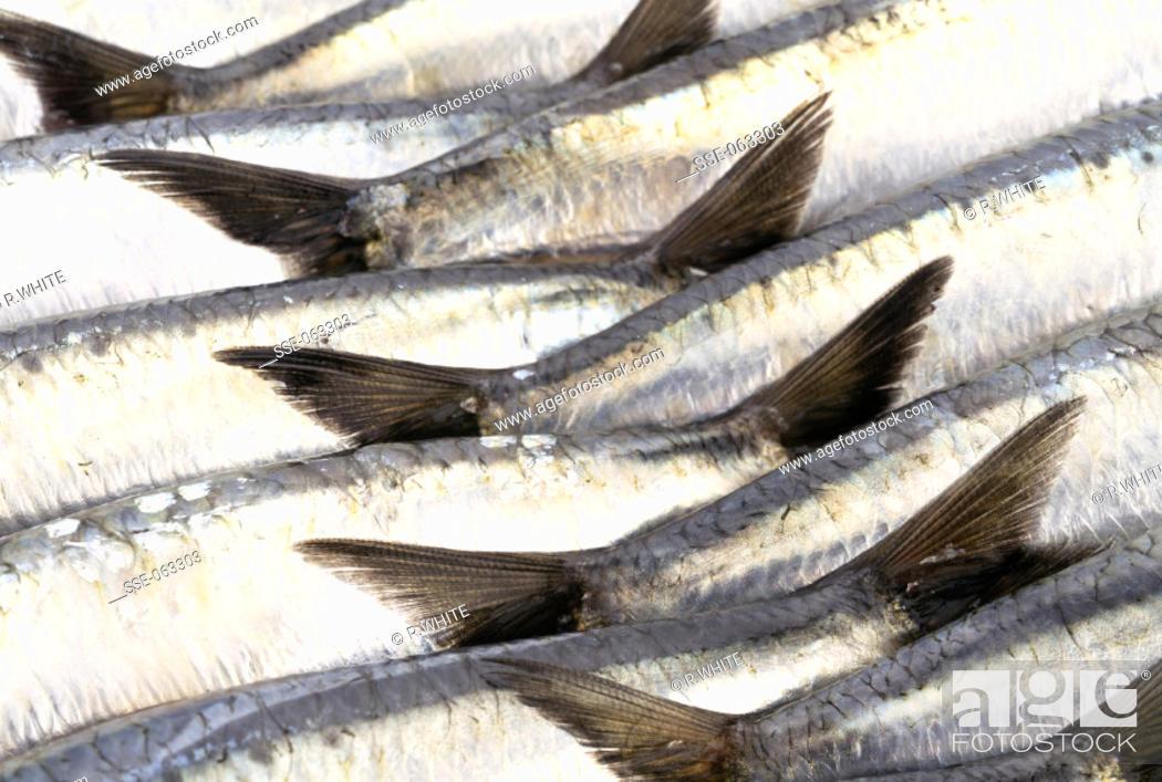 Photo de stock: Fish.