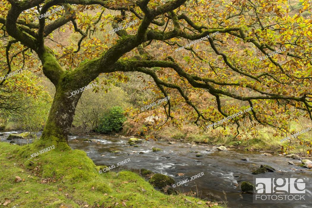 Stock Photo: Badgworthy Water in the Doone Valley in Autumn on the Devon and Somerset boarder in Exmoor National Park, England.