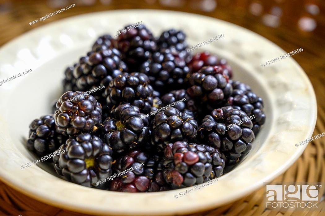 Stock Photo: Blackberries (Rubus) waiting to be eaten from bowl, Fallston, MD.