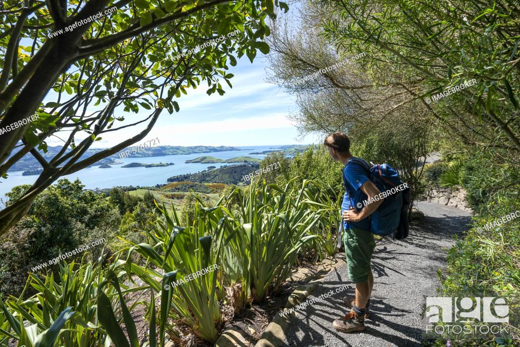 Photo de stock: Young man on his way in the park, view of Otago Peninsula from the park of Larnach Castle, Dunedin, Otago Peninsula, South Island, New Zealand, Oceania.
