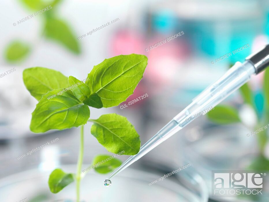 Stock Photo: Pipette dropping test sample onto seedling in petri dish.