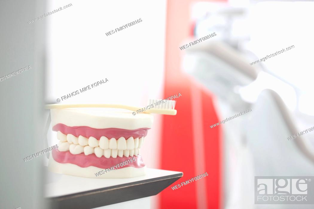 Stock Photo: Germany, Exhibition dentures with toothbrush in dental office.