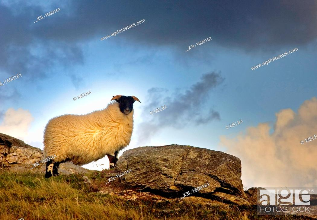 Stock Photo: Lewis Island  Scotland  United Kingdom.