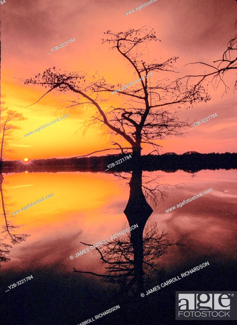 Stock Photo: Lone cypress tree in Reelfoot Lake Tennessee.